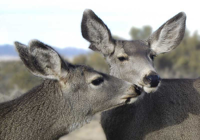 Deer_jpg